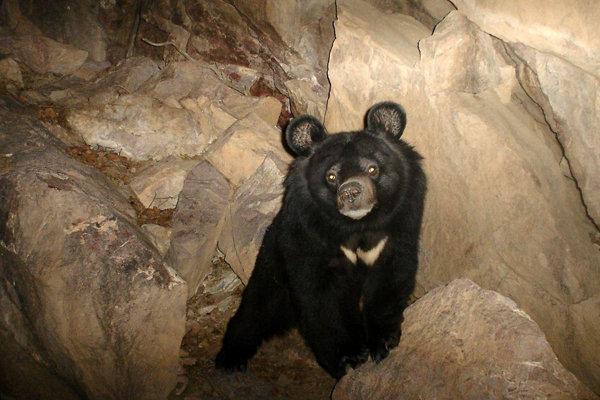 پایش زیستگاه خرس سیاه در شهرستان سرباز شروع شد
